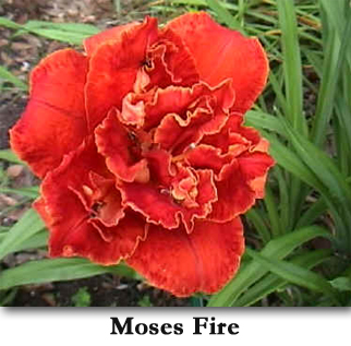 moses fire322